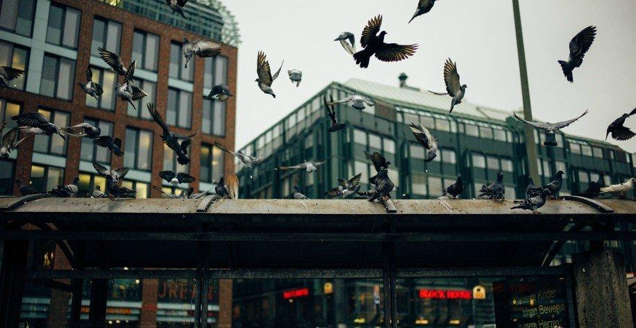 Troppi piccioni in condominio: quale soluzione?