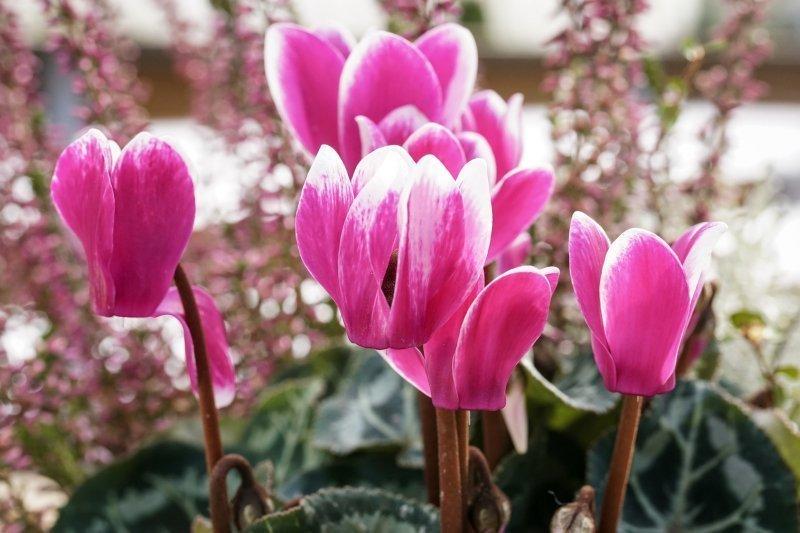 Proteggere le piante dal freddo in condominio