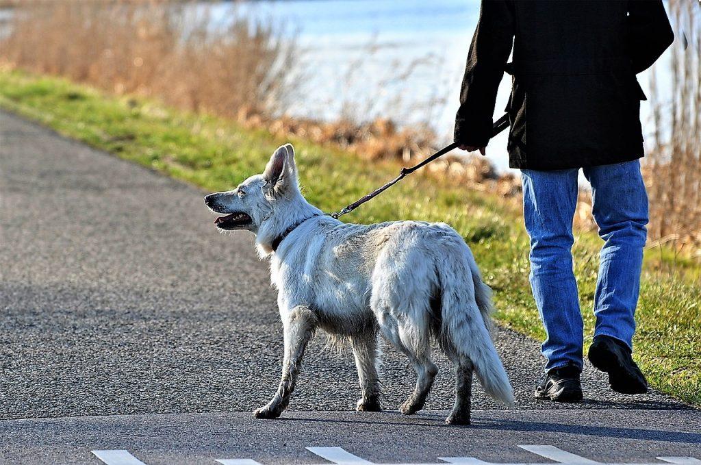 Diritti e doveri dei cani (e dei padroni)
