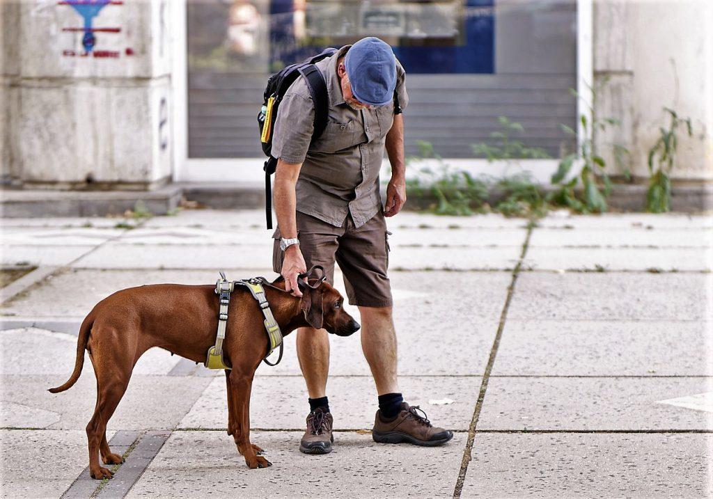 La presenza di un animale domestico comporta la presenza di diritti e doveri per l'animale ed il padrone