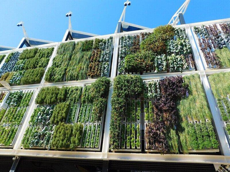 Giardini verticali ed altre installazioni verdi
